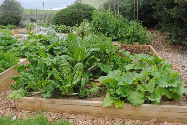 gardening leave - Buena Vista Farm